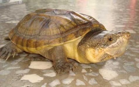 养龟小技巧